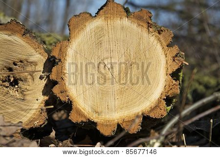 Cutting Pine Log With A Symmetrical Cross-section