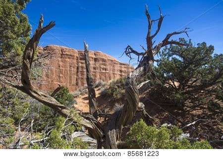 dead tree and rock formation, Arches