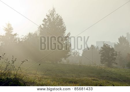 Fog Above Green Grass