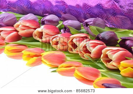 Many colors of tulips of different colors stacked in rows composition on a white background
