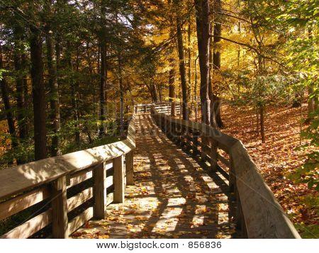 Boardwalk in the Fall