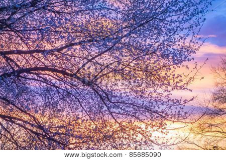 Beautiful Landscape Image With Trees Silhouette At Sunset In Spring