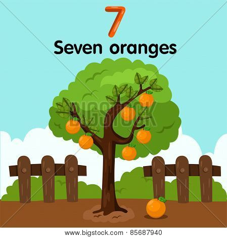 Illustrator of number seven oranges