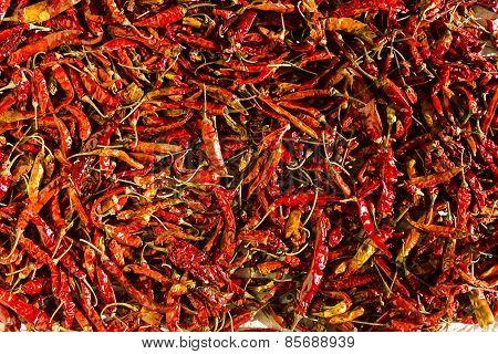 red chillies kept under sunlight