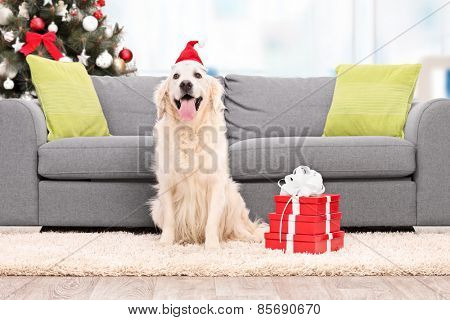 Dog with Santa hat sitting by a sofa indoors