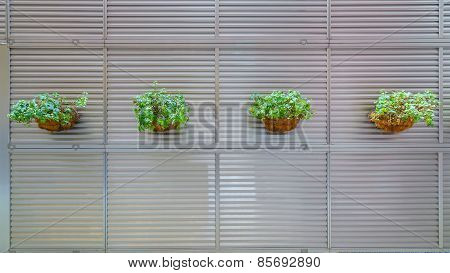 Natural Flower pots on The Aluminium wall Partition