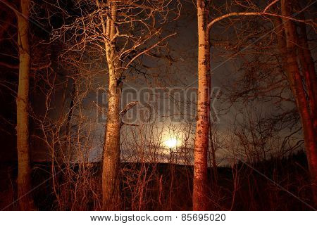Moonlight Trees