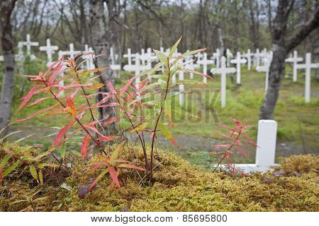 Autumn, fall and colored plants this side a cemetery.