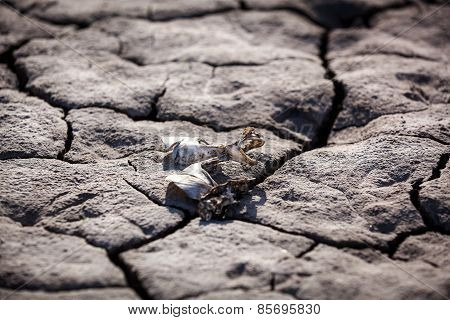 Drought, dry cracked earth