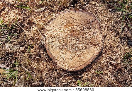 Closeup Of Stump