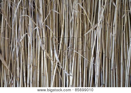 Dried Reed.
