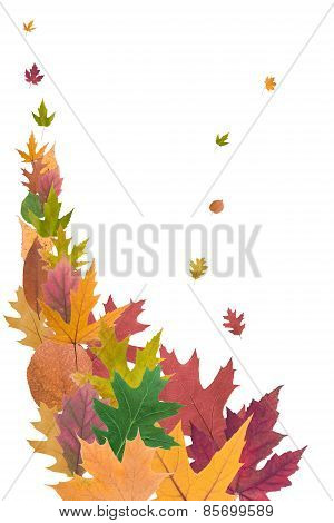 Composition Of  Autumn Leaves