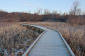 picture of wetland  - Boardwalk crossing wetlands and into forest of minnesota valley wildlife refuge in bloomington - JPG