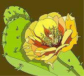 picture of prickly-pear  - vector illustration of the flower of the prickly pear - JPG
