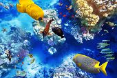 foto of shoal fish  - Wonderful and beautiful underwater world with corals and tropical fish.