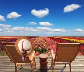 stock photo of buttercup  - Two chaise lounges for rest stand on a scaffold at a picturesque flower field - JPG
