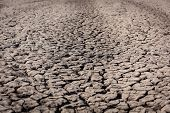 stock photo of drought  - Died and cracked soil - JPG