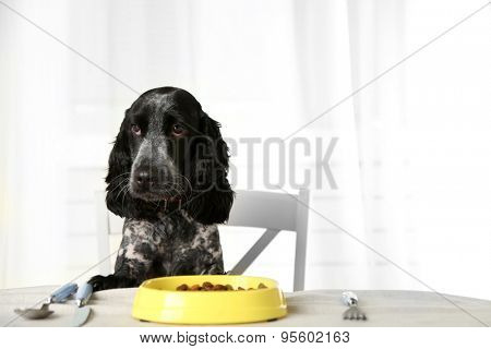 Dog looking at plate of kibbles on dining table