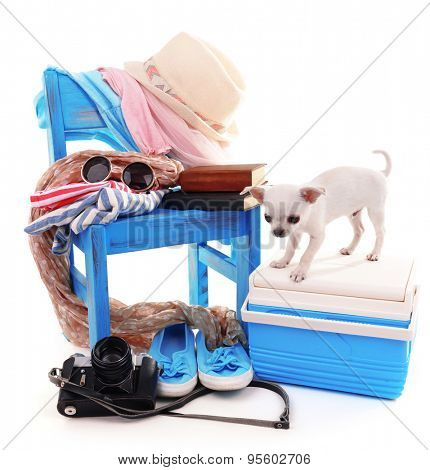 Adorable chihuahua dog and heap of different things isolated on white