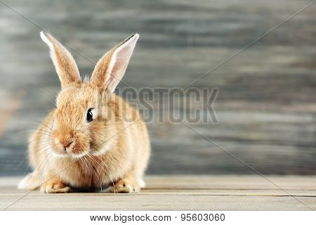 Little rabbit on wooden background