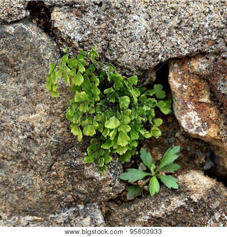 Plant Growing From The Rocks