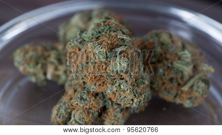 Blueberry Headband Hybrid Medical Marijuana