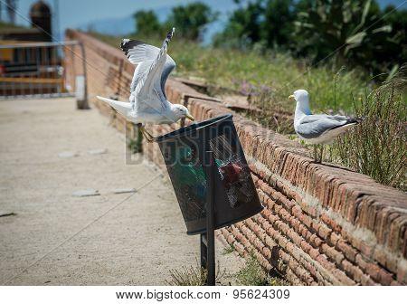 Seagulls In Barcelona
