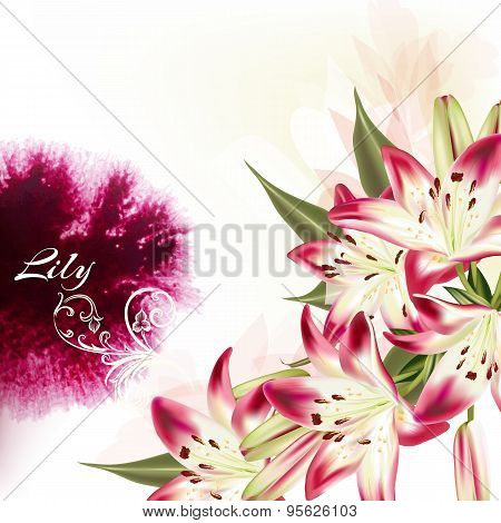 Illustration Or Background With Pink Lily Flowers And Watercolor Spot