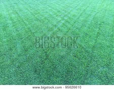 Diamond Pattern Grass