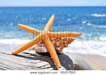 closeup of a starfish and a conch on an old washed-out tree trunk in the beach, with a bright blue sea in the background