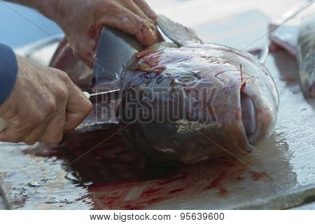 Fishermen cleaning and filleting a fresh caught saltwater fish.