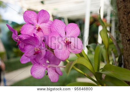 Beautiful Purple Orchid Phalaenopsis On Natural Background