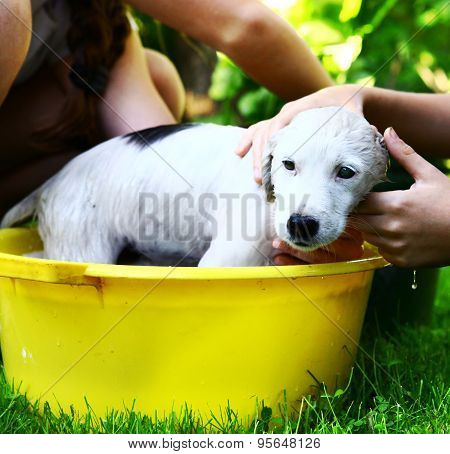 kids wash stray white puppy in yellow basin on the summer garden background