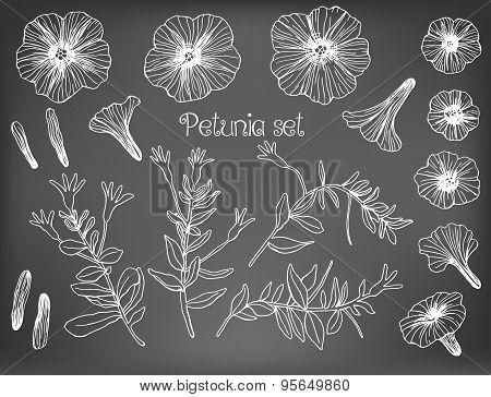 Petunia Set