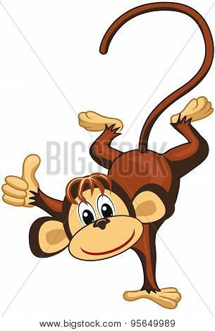 Funny monkey on a white background.Thumbs up