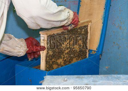 Beekeeper Puts Frame