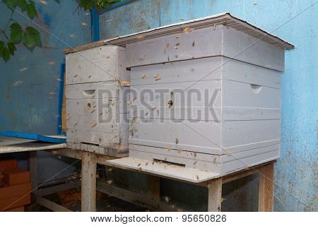 Two Beehives