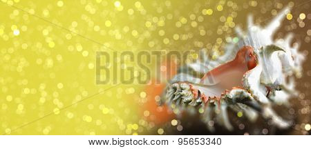 Seashell Chicoreus Ramosus On Sparkling Bokeh Background