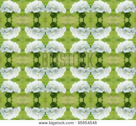 Geraniums Seamless Pattern Background