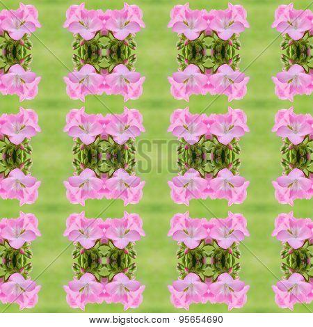 Pink Bicolor Geraniums Seamless Pattern Background
