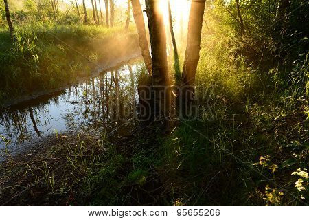 Sunrise Through The Fog In A Forest River In The Early Summer Morning