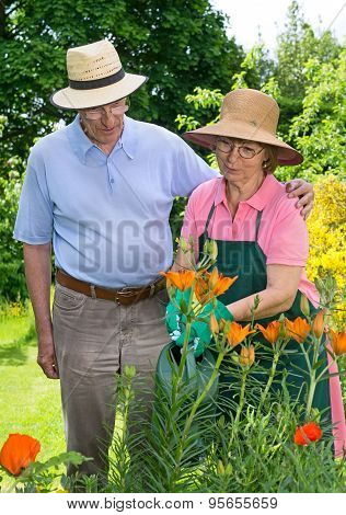 Senior Couple Watering Flowers Together In Garden