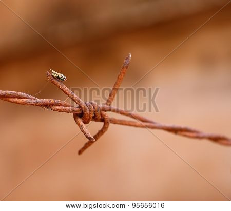 fly on rusty barb wire