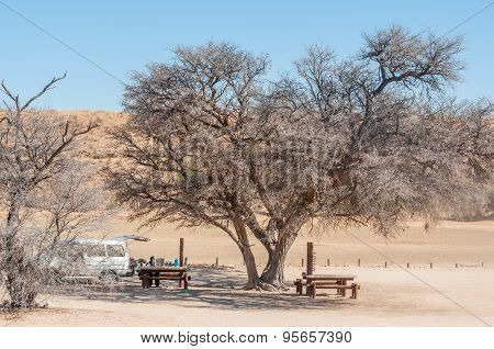 Camel Thorn Tree At The Kamqua Picnic Site