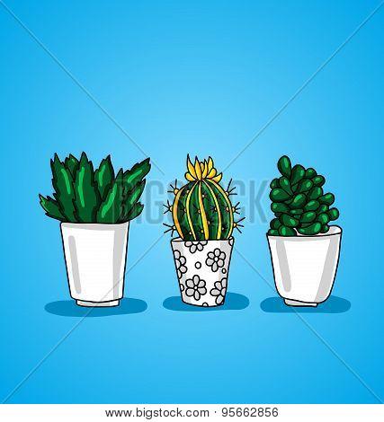 Three Decorative Potted Cactus