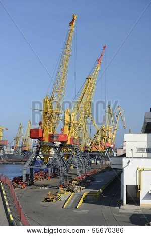 Cranes In The Harbor