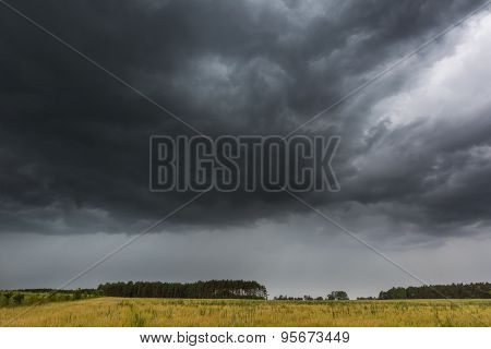 Dark Stormy Clouds Over Corn Field At Summer