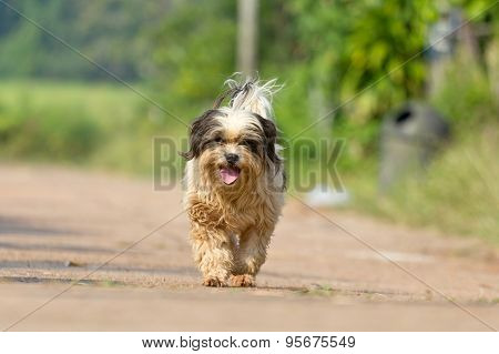 The Dog Running Or Walking On Road