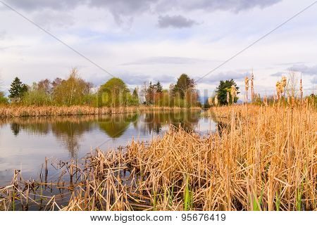 Landscape of lake and reeds.