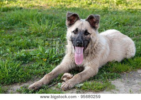 Dog On Green Lawn